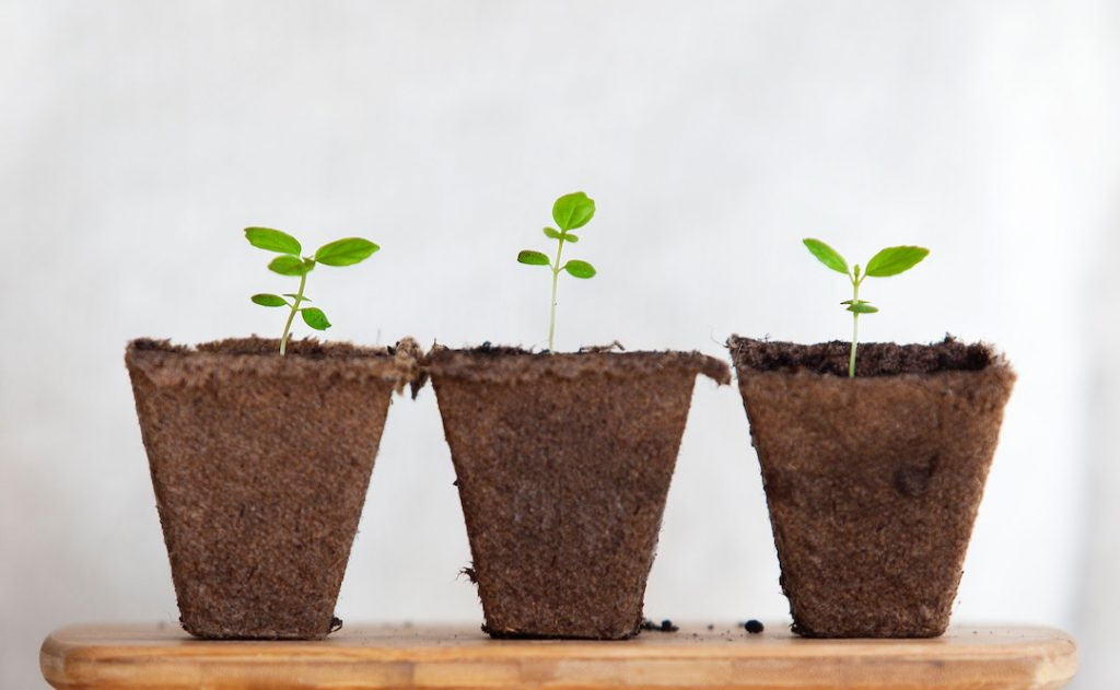 Image of three seedlings