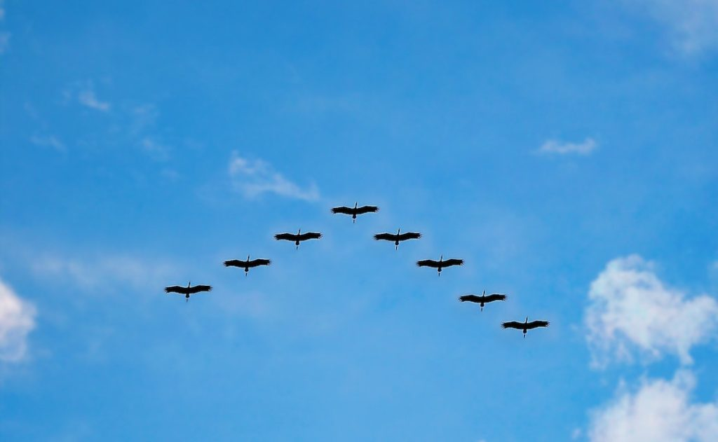 Image of birds in formation